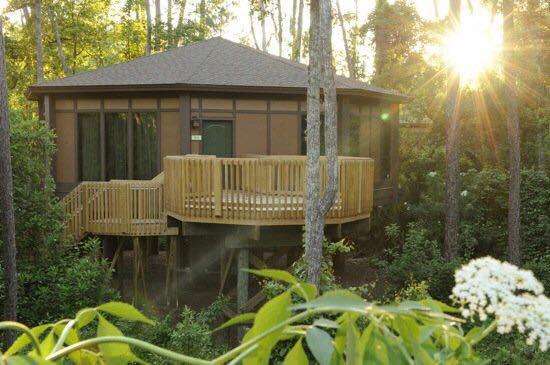 Disney World's Treehouse Villa Resort